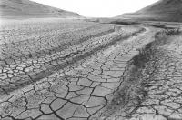 immagine di una strada non asfaltata sarda completamente essiccata. Deserto. (BN)