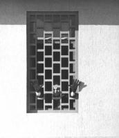 Enzo Tortora, agli arresti preventivi, mostra il viso e le mani oltre le sbarre di una finestra del carcere.  (BN) Ottima e famosa (serie di fotografi
