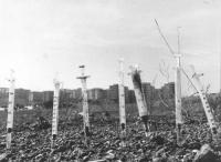 sette siringhe in primo piano infilate nel terreno di un parco in periferia di una città con palazzoni sullo sfondo (BN) buona