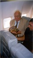Marco Pannella, sul sedile di un aereo, tiene in mano una tartaruga.