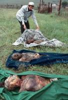 Corpi di civili ceceni, uccisi dall'esercito russo, e restituiti dietro pagamento ai familiari.