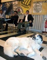 Un cane assiste all'incontro di Michele De Lucia, Rita Bernardini e Daniele Capezzone, con i militanti romani, presso la sede di Torre Argentina.